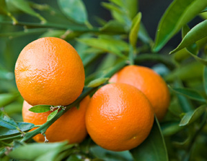 citrus fruit intake reduces the risk of heart attack