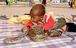 18 month-old child chewed the head of a snake